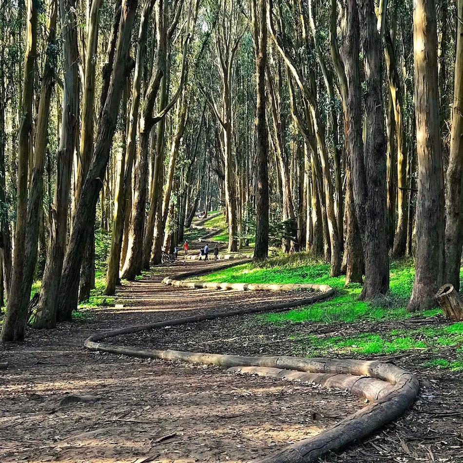 lover's lane path